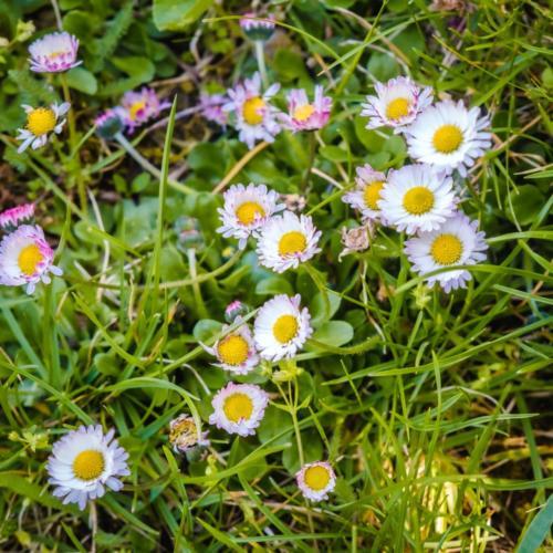 010 - skolka zahrada